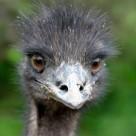 1378896_emu